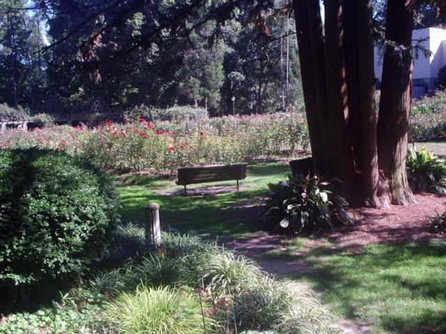 Raleigh Rose Garden in October