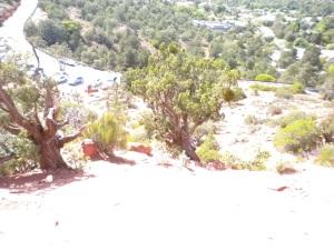 Trees at Sedona Airport Vortex