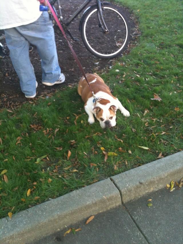 Occupy Raleigh - so tiring - whew! - hey yoga man